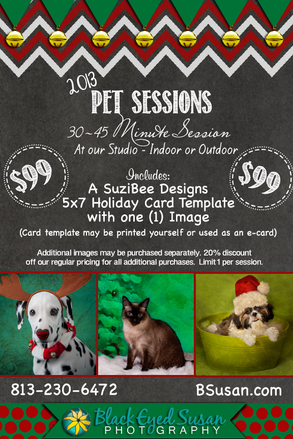 Pet Sessions 2013